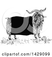 Vintage Black And White Sketched Ram