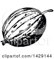 Clipart Of A Vintage Black And White Gooseberry Royalty Free Vector Illustration