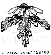 Clipart Of A Vintage Black And White Daisy Design Royalty Free Vector Illustration