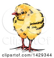 Poster, Art Print Of Cute Yellow Chick