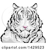 Clipart Of A Siberian White Tiger Royalty Free Vector Illustration