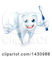 Clipart Of A Happy White Tooth Mascot Holding A Toothbrush And Giving A Thumb Up Royalty Free Vector Illustration by AtStockIllustration