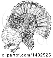 Clipart Of A Sketched Black And White Turkey Bird Royalty Free Vector Illustration by Vector Tradition SM
