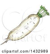 Clipart Of A Sketched Daikon Radish Royalty Free Vector Illustration
