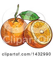 Clipart Of Sketched Oranges Royalty Free Vector Illustration by Vector Tradition SM