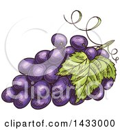 Clipart Of A Sketched Bunch Of Purple Grapes Royalty Free Vector Illustration by Vector Tradition SM