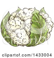 Clipart Of A Sketched Head Of Cauliflower Royalty Free Vector Illustration