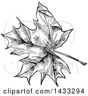 Black And White Sketched Maple Leaf
