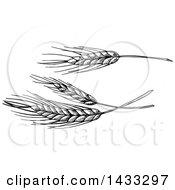 Clipart Of Sketched Black And White Wheat Royalty Free Vector Illustration