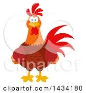 Chicken Rooster Bird