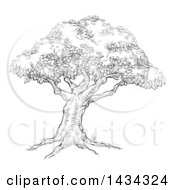 Clipart Of A Black And White Sketched Tree Royalty Free Vector Illustration