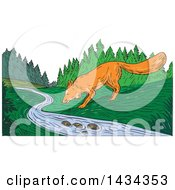 Clipart Of A Sketched Fox Drinking From A Creek Royalty Free Vector Illustration
