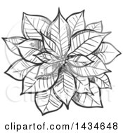 Sketched Dark Gray Christmas Poinsettia