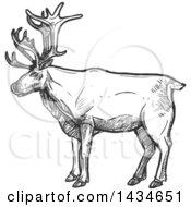 Sketched Dark Gray Caribou Or Christmas Reindeer