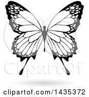 Black And White Butterfly With A Shadow