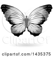 Gray Butterfly With A Shadow