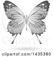 Flying Gray Butterfly And Shadow