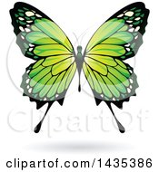 Green Butterfly With A Shadow