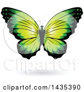 Clipart Of A Green Butterfly With A Shadow Royalty Free Vector Illustration by cidepix