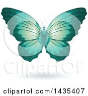 Flying Turquoise Butterfly And Shadow