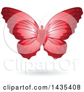 Flying Red Butterfly And Shadow