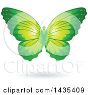 Flying Green Butterfly And Shadow