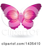 Flying Pink Butterfly And Shadow