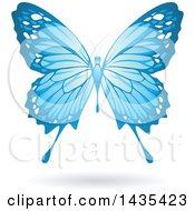 Flying Blue Butterfly And Shadow