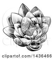Vintage Black And White Engraved Or Woodcut Blooming Waterlily Lotus Flower