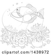 Black And White Lineart Humu Picasso Triggerfish Over Corals And Anemones