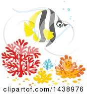 Black White And Yellow Angelfish Over Corals