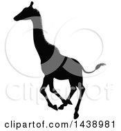 Black Silhouetted Giraffe Running