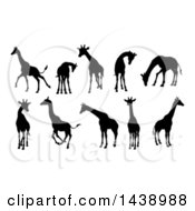 Clipart Of Black Silhouetted Giraffes Royalty Free Vector Illustration by AtStockIllustration