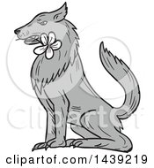 Clipart Of A Sketched Timber Wolf Sitting With A White Plumeria Flower In His Mouth Royalty Free Vector Illustration