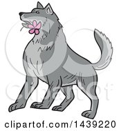Clipart Of A Sketched Timber Wolf With A Pink Plumeria Flower In His Mouth Royalty Free Vector Illustration