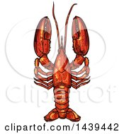 Clipart Of A Sketched And Colored Lobster Royalty Free Vector Illustration