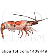 Clipart Of A Sketched And Colored Shrimp Royalty Free Vector Illustration