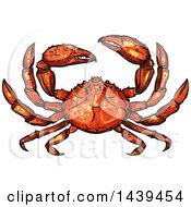 Clipart Of A Sketched And Colored Crab Royalty Free Vector Illustration