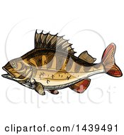 Sketched And Colored Perch Fish