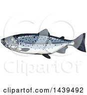 Clipart Of A Sketched And Colored Salmon Fish Royalty Free Vector Illustration