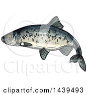 Clipart Of A Sketched And Colored Herring Fish Royalty Free Vector Illustration