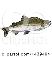 Sketched And Colored Humpback Salmon Fish In Spawning Phase