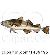 Clipart Of A Sketched And Colored Navaga Fish Royalty Free Vector Illustration