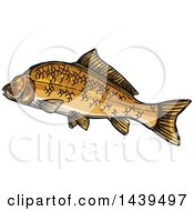 Clipart Of A Sketched And Colored Carp Fish Royalty Free Vector Illustration