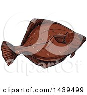 Clipart Of A Sketched And Colored Flounder Fish Royalty Free Vector Illustration