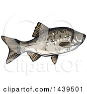 Clipart Of A Sketched And Colored Crucian Carp Fish Royalty Free Vector Illustration