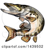 Sketched And Colored Pike Fish