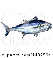 Clipart Of A Sketched And Colored Tuna Fish Royalty Free Vector Illustration