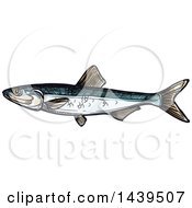 Clipart Of A Sketched And Colored Sprat Fish Royalty Free Vector Illustration