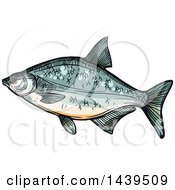 Clipart Of A Sketched And Colored Bream Fish Royalty Free Vector Illustration